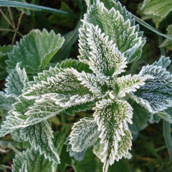 Fraicheur : vers un retour des gelées pour les ultimes jours de l'hiver