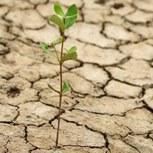 Le risque de sécheresse se précise